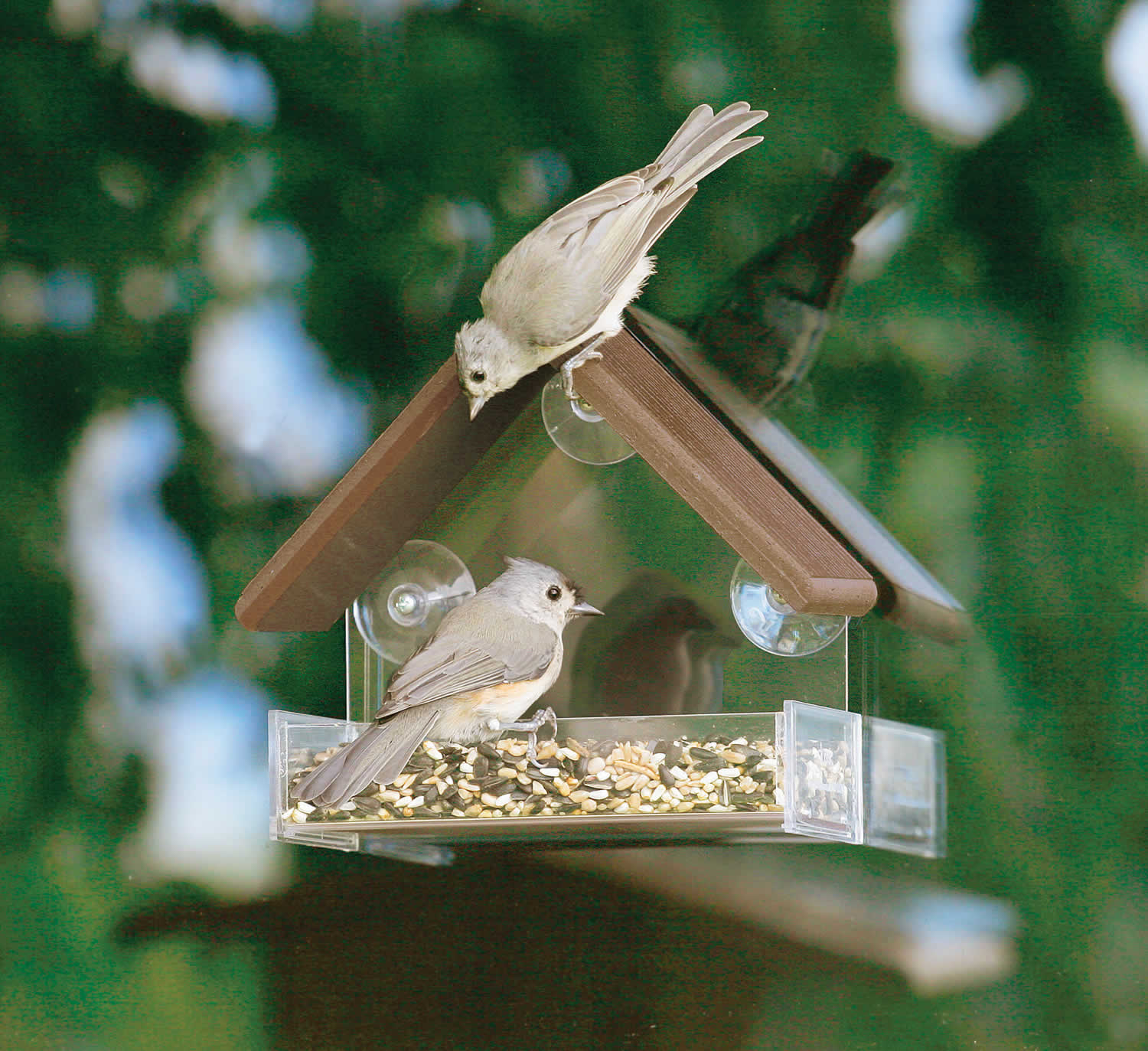 Duncraft Com Duncraft 5273 Eco Friendly Window Bird Feeder