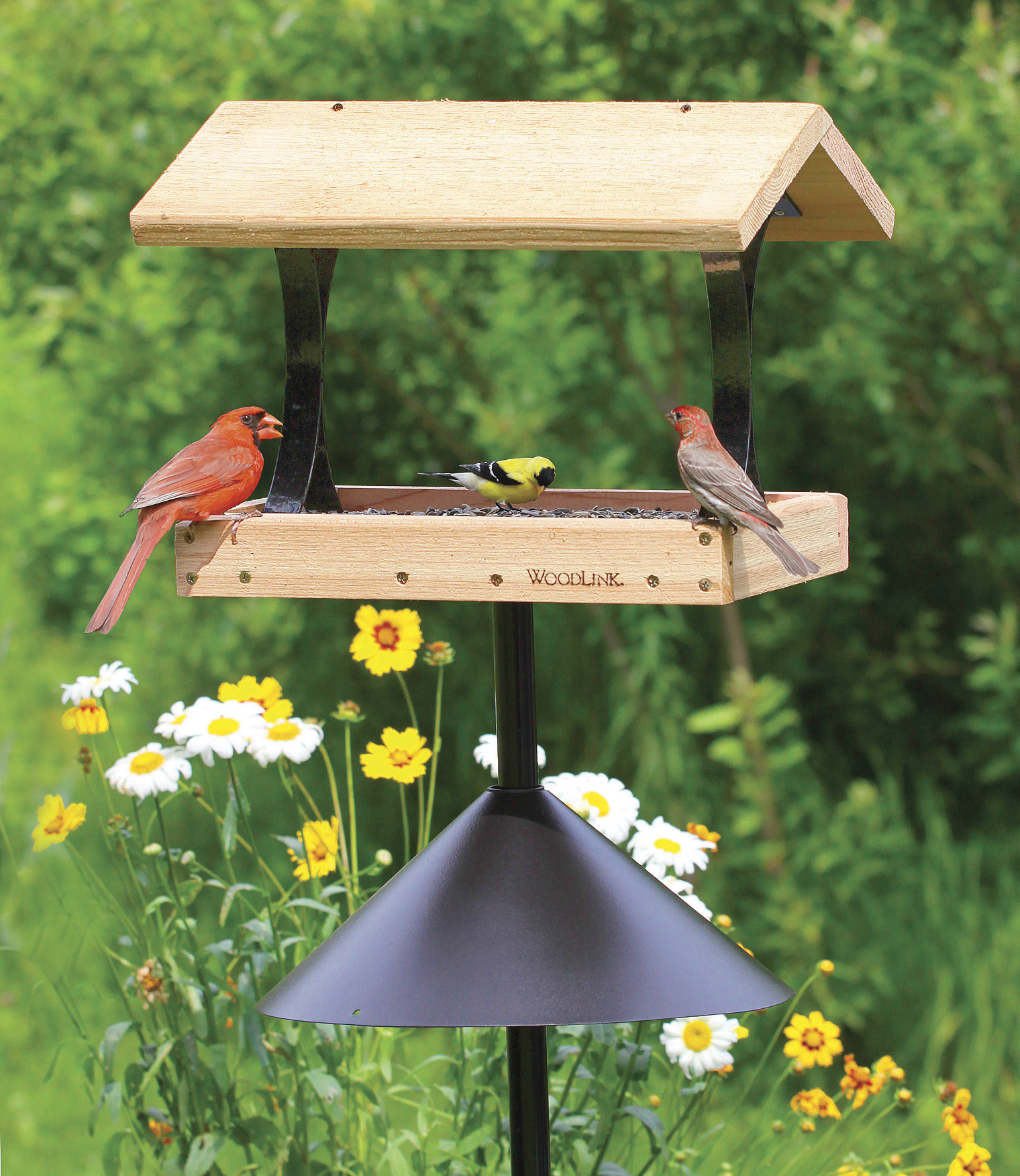 dp garden birdscapes wild be proof pet ca squirrel lawn how perky feeder bird to amazon gone patio ii