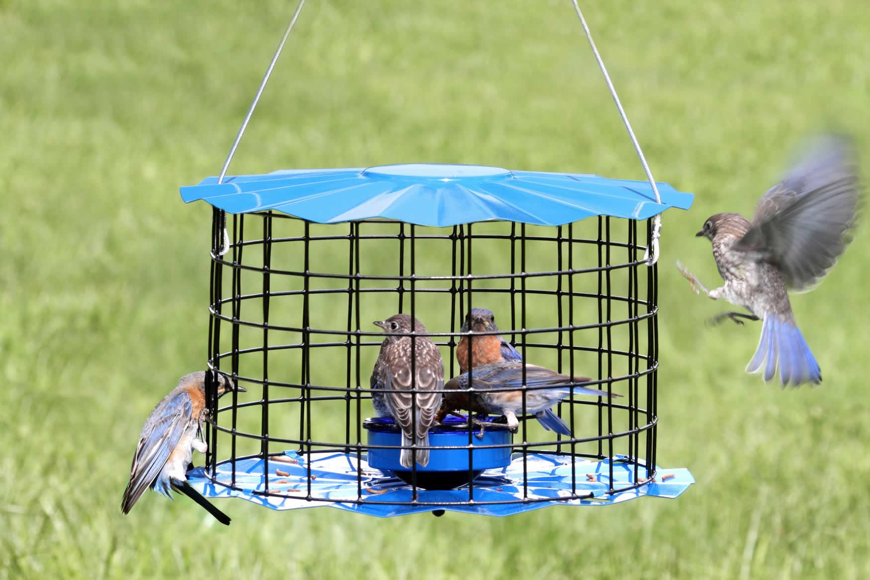 bird outside blue com feeders dp feeder amazon wild perky gazebo garden pet outdoor for