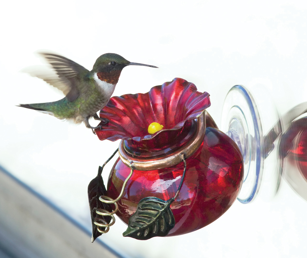 hummingbird feeder bird gardening product gifts for thumbnail blossoms sale feeders glass painted