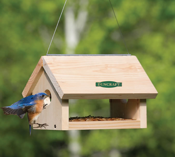 bird bluebird feeder backyard resources care feeders feeding naturalist educational the