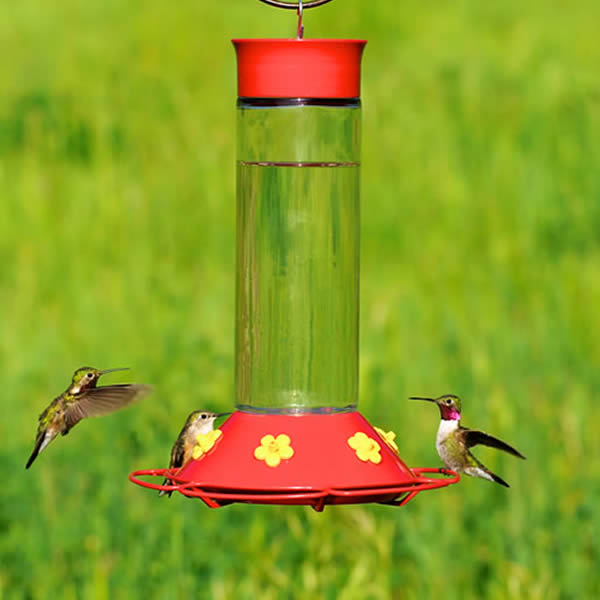 glass humming red hummingbird bird yardbirds feeder bottle product