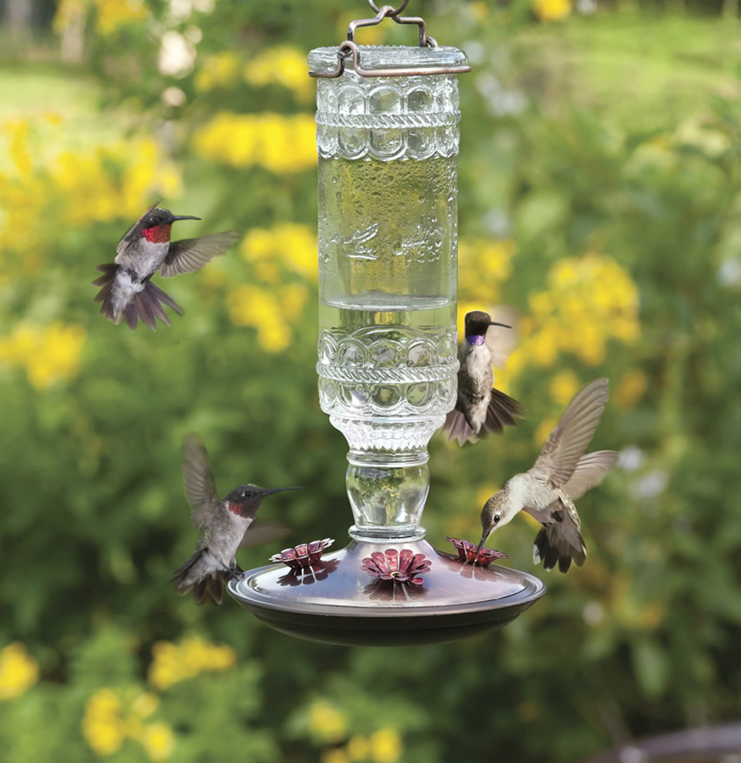 hardware set humingbird from to perky how hummingbird your watch up feeder pet ace