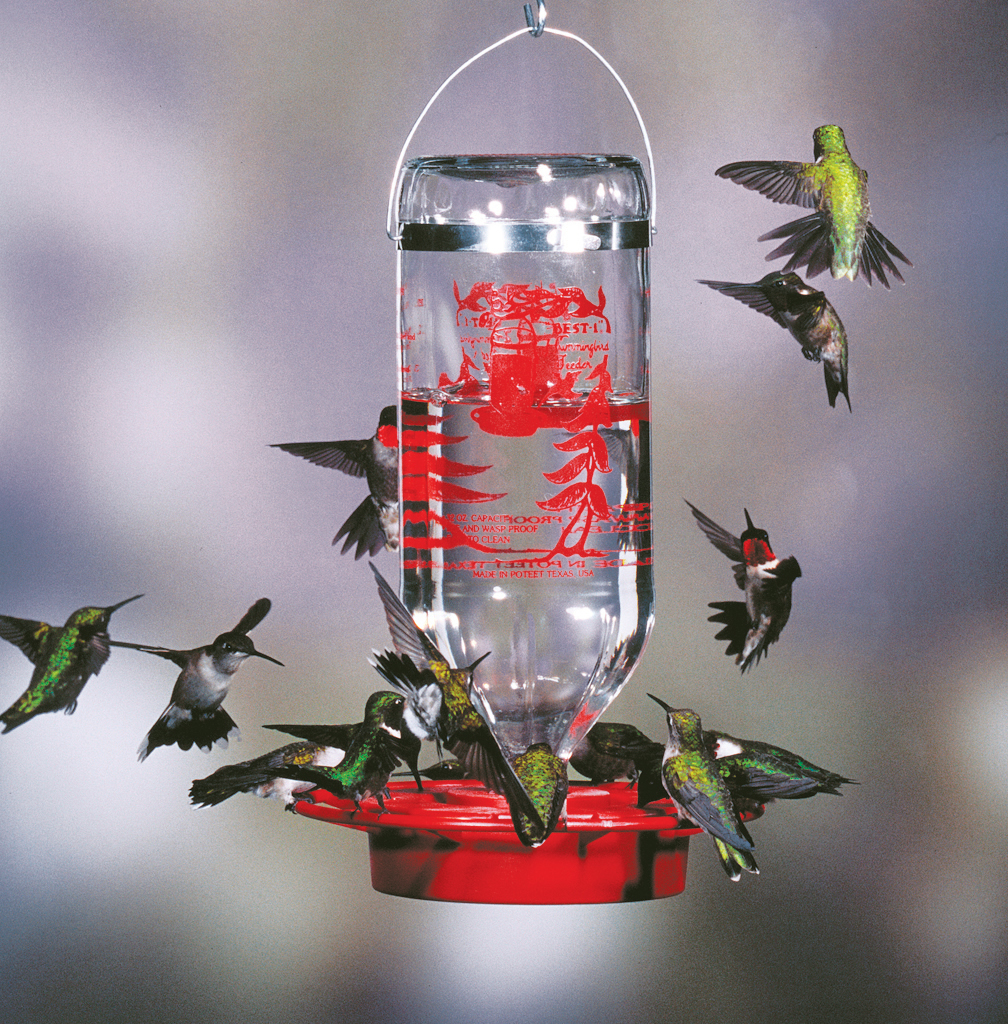 Image result for a charm of hummingbirds