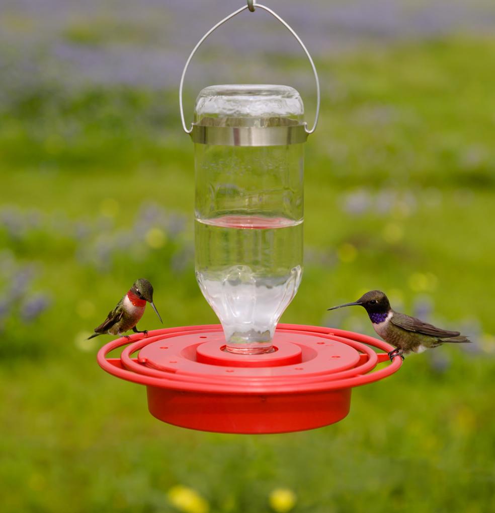 Duncraft Com Best 1 Hummingbird Feeder 8 Oz