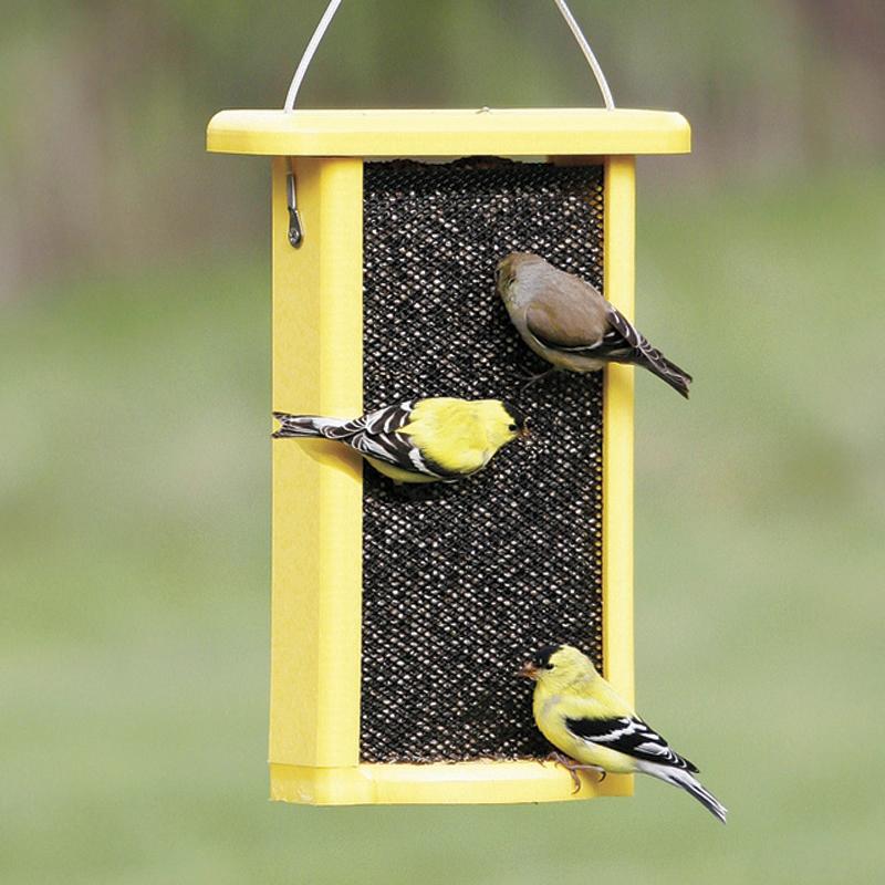 amazon food bird com dp feeder classic feeders outdoor pet perky garden wild