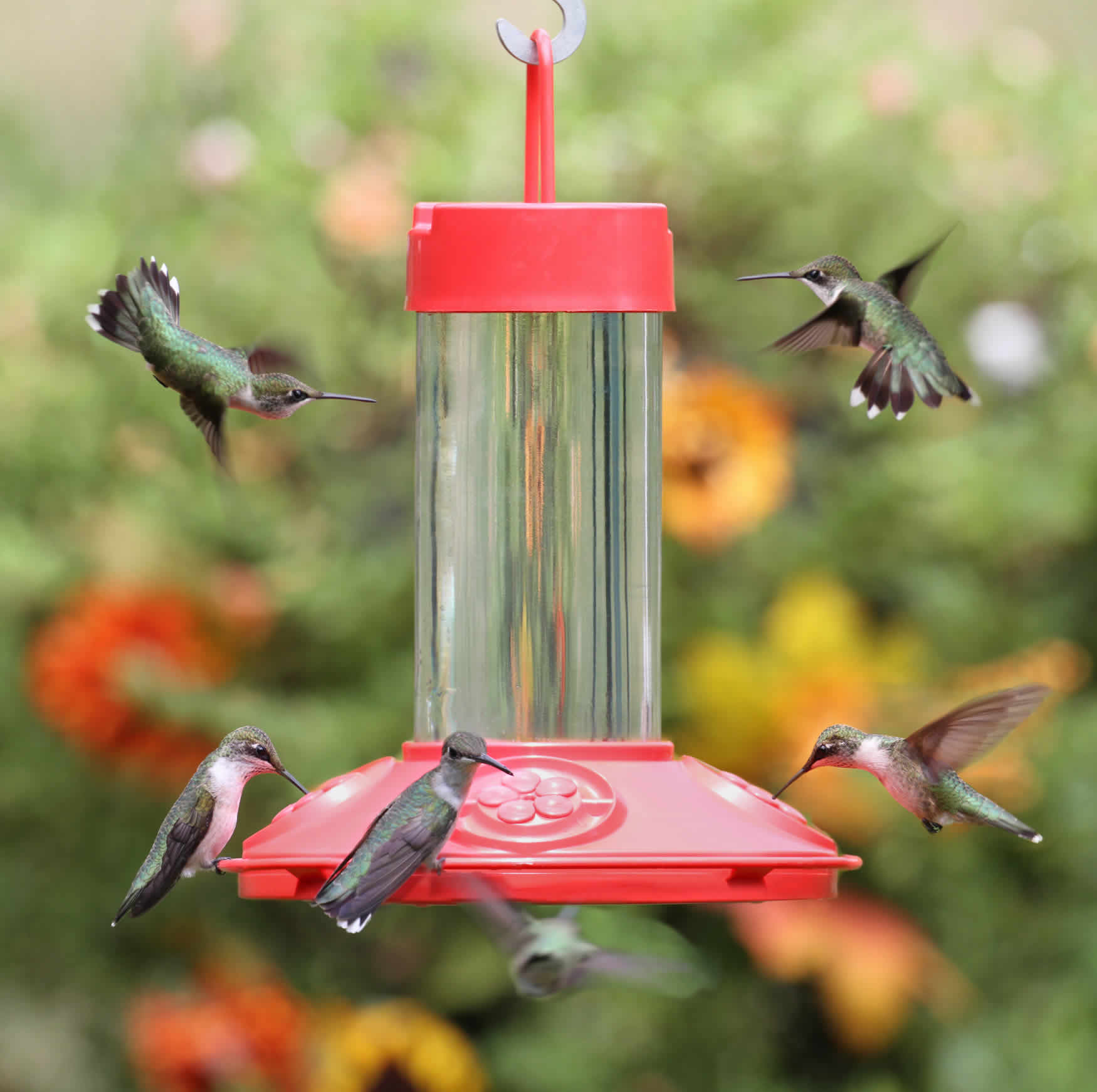 on feeder savings shop perky glass hummingbird copper and hanging pet