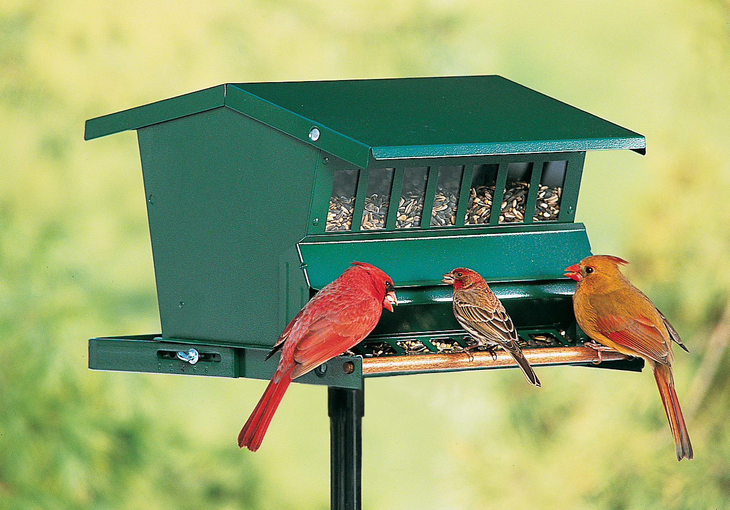 Deluxe Bird Feeders