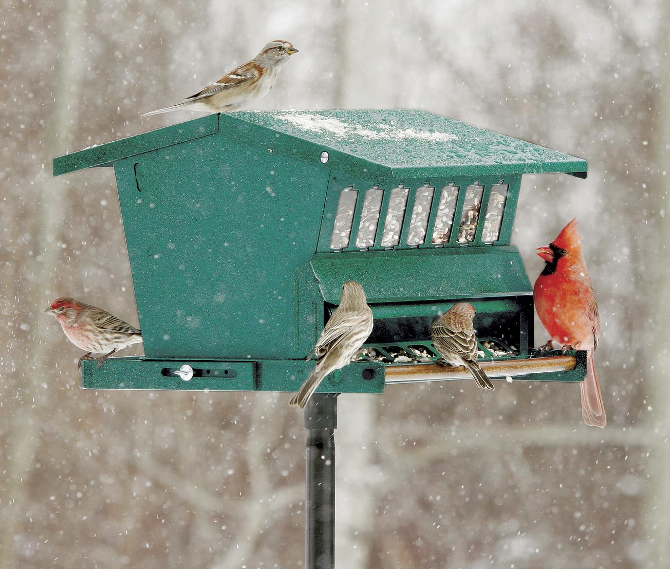 original absolute bird feeder - Squirrel Proof Bird Feeders