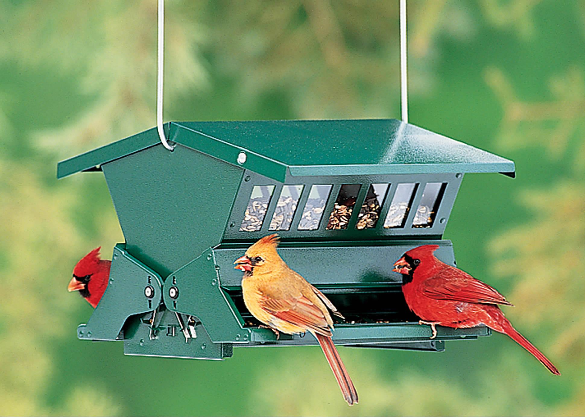 absolute ii bird feeder - Squirrel Proof Bird Feeders