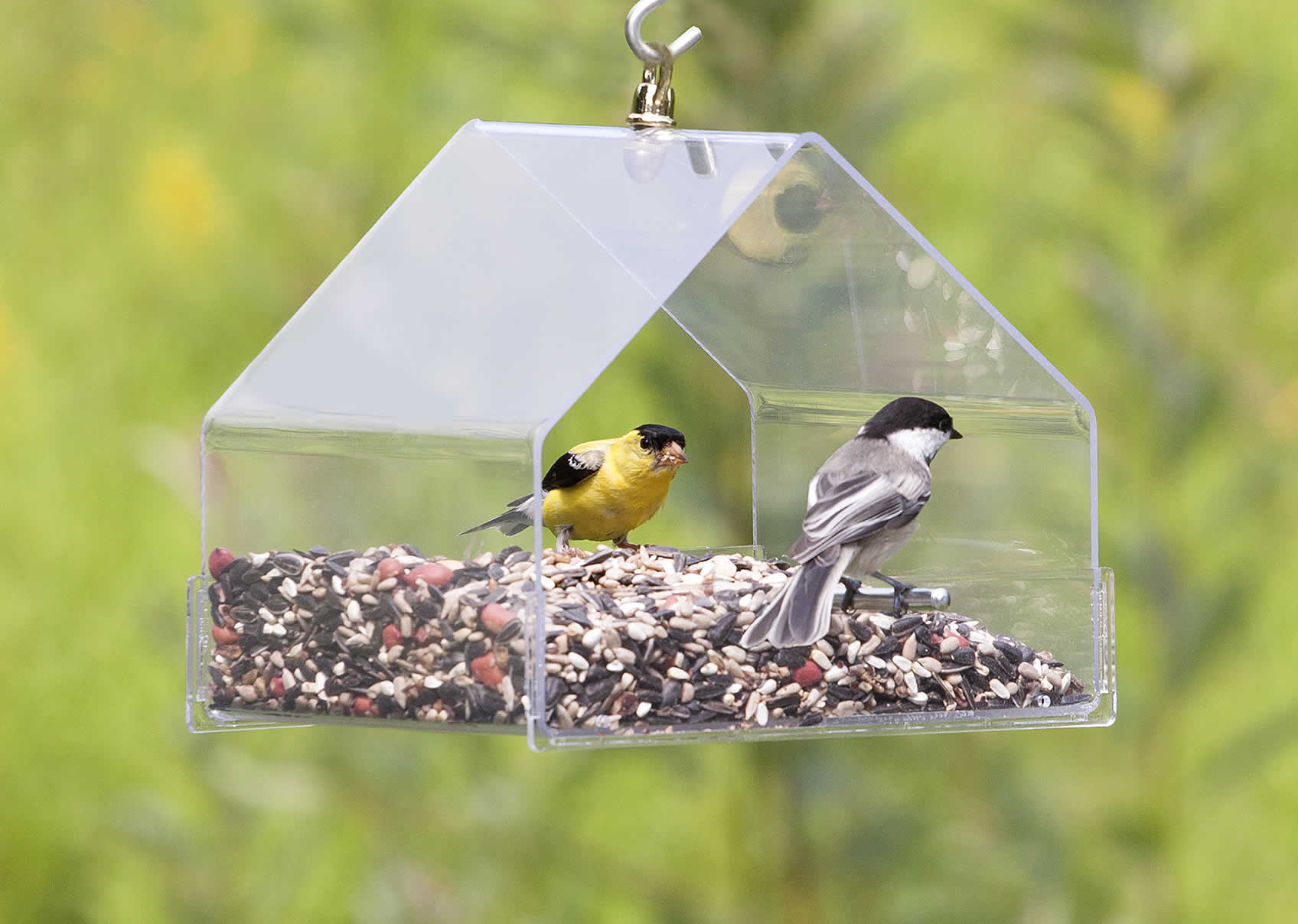 the feeder type of a common Fact sheet: coping with diseases at bird feeders  salmonellosis is the most common bird-feeder disease trichomoniasis (trick-oh-mo-nye-uh-sis.