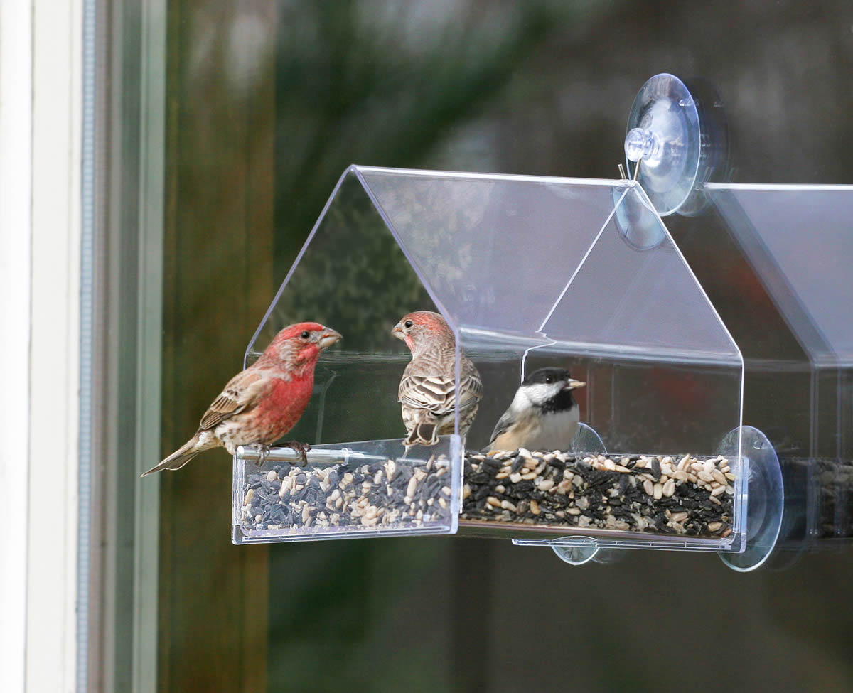 birdfeeder feeders canadian projects plans your woodworking home cedar this project lead up magazine hand liven bird acrylic with made feeder and backyard