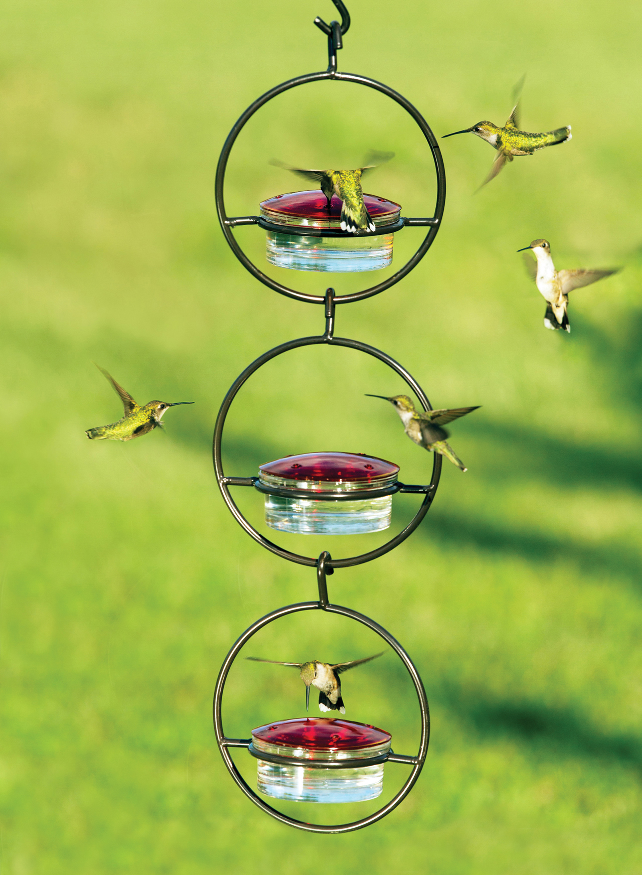 plastic com perkypet strawberry hummingbird perky model us humingbird pet feeder bf