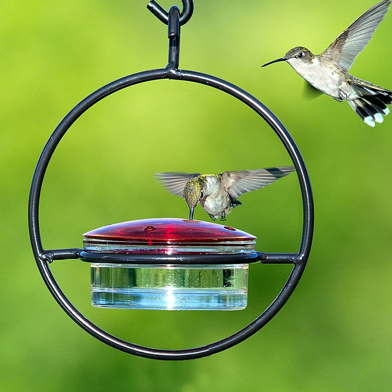 blown feeders treat multi com outdoor hand garden products sale glass best amazon feeder perch by dp color home for hummingbird with