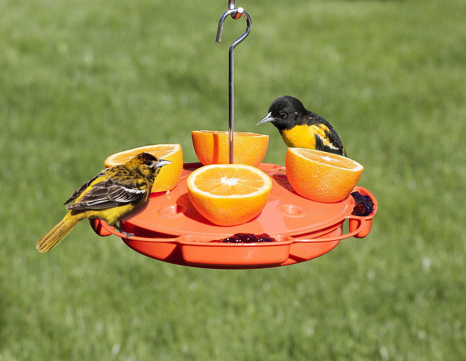 aspects products oz oriole feeder best