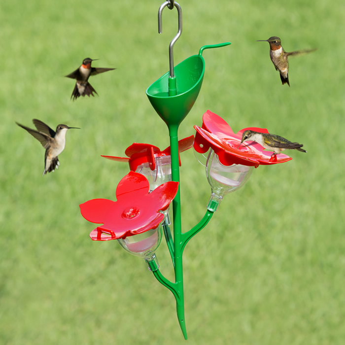 hummingbird bird dome humming red feeder and p