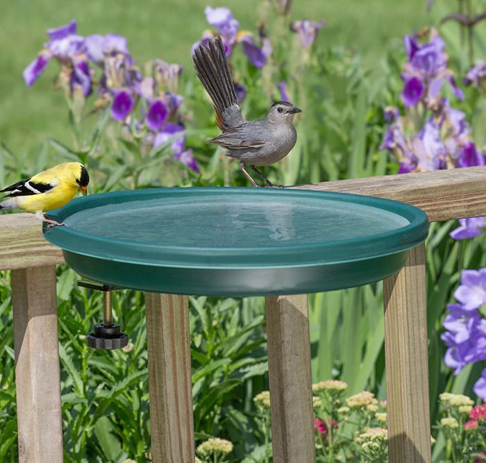 Duncraft.com: Clamp Mount Bird Bath, Green