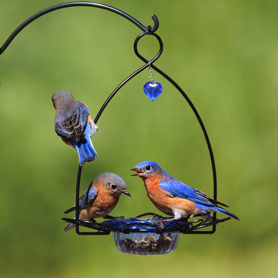 Duncraft Com Bluebird Flower Feeder