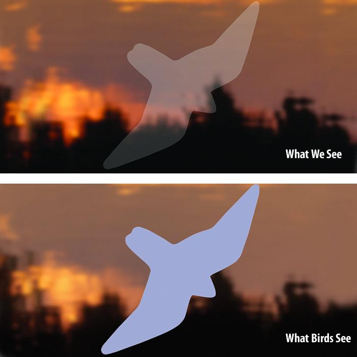 Duncraftcom Duncraft Bird Safe Birds Of Prey Window Strike Decals - Window decals for birds