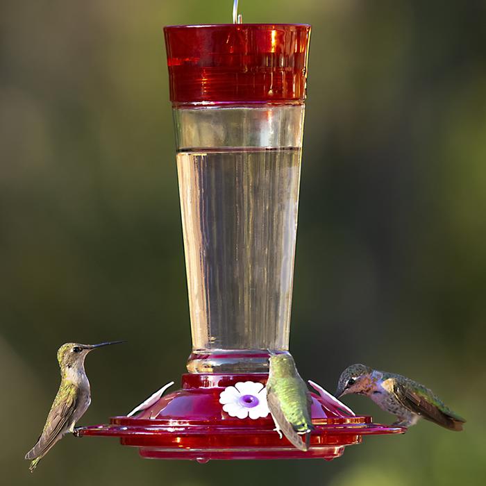 Duncraft Com Classic Ruby Hummingbird Feeder