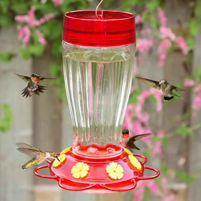 Big Gulp Hummingbird Feeder