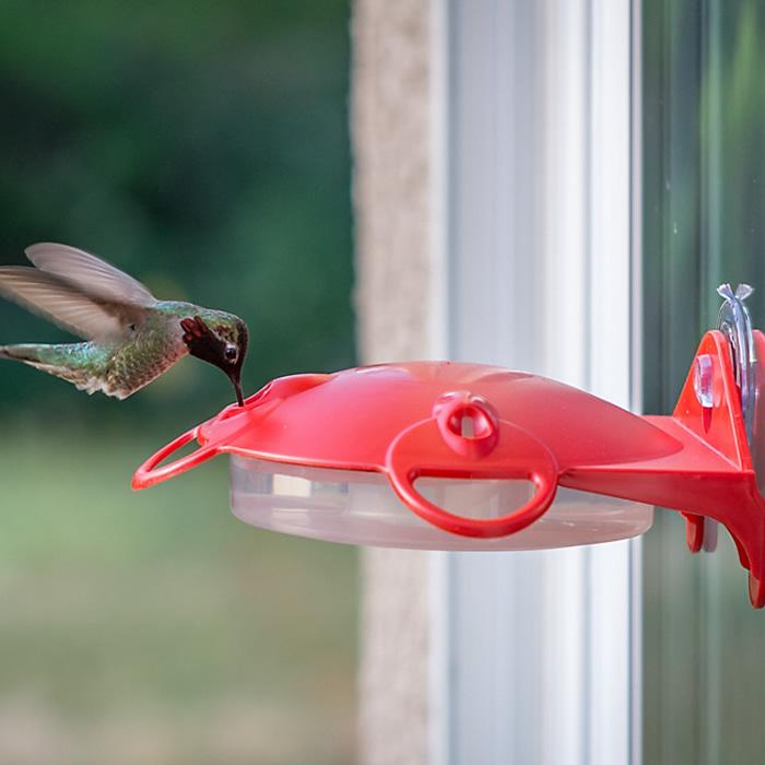Duncraft Com Perky Pet Window Mount Hummingbird Feeder