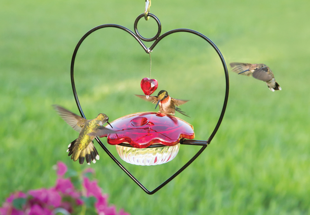 hummingbird flower feeder pot products com hanging hummingbirdhq