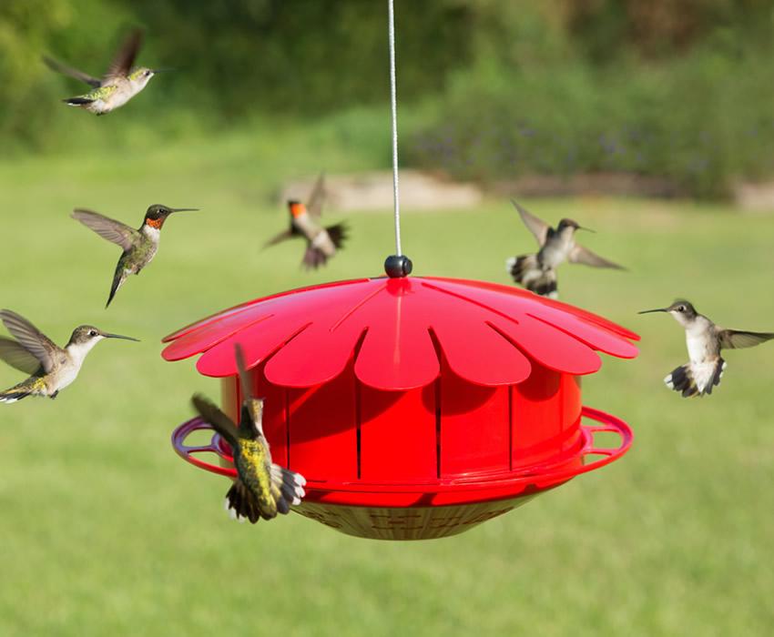 Humm Bug Hummingbird Protein Feeder