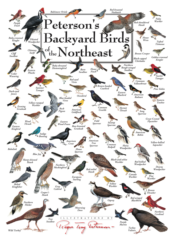 Peterson Backyard Birds Posters - Duncraft.com: Peterson Backyard Birds Posters
