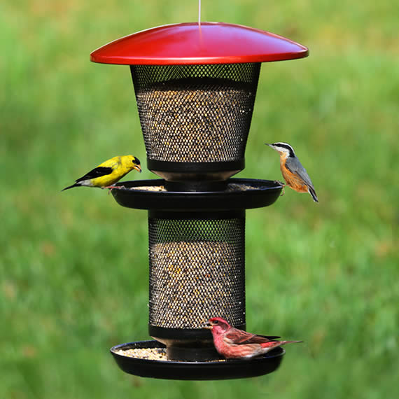 feeding kit garden to gear traditional feeder wild bird assemble station feeders from easy with