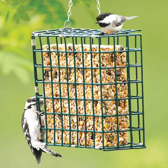 Large Suet Cakes