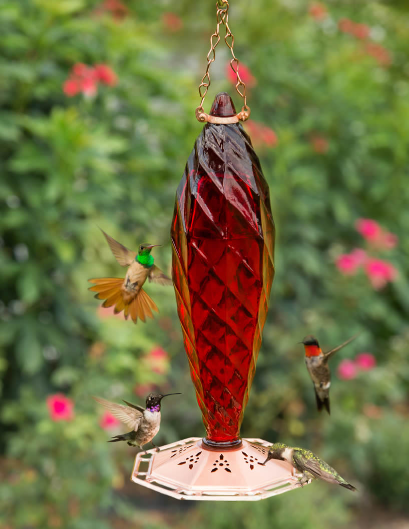 img feeder glass sale august friday for hours feeders and hummingbird extended