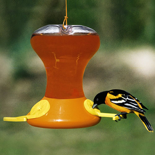 how to get birds to come to your window feeder