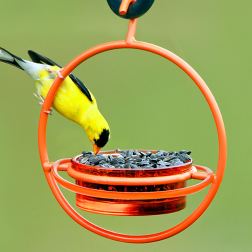 Orange Hanging Sphere Feeder with Perch