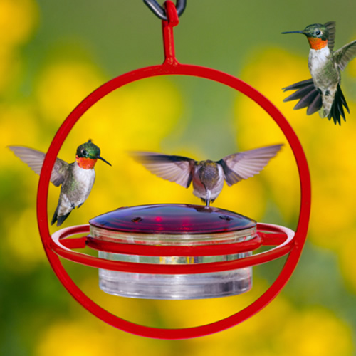 Hanging Sphere Hummingbird Feeder with Red Perch
