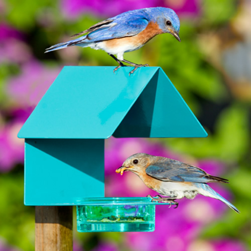Aqua Metal Glass House Bird Feeder