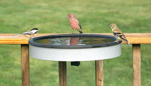 Heated Deck Mount Bird Bath