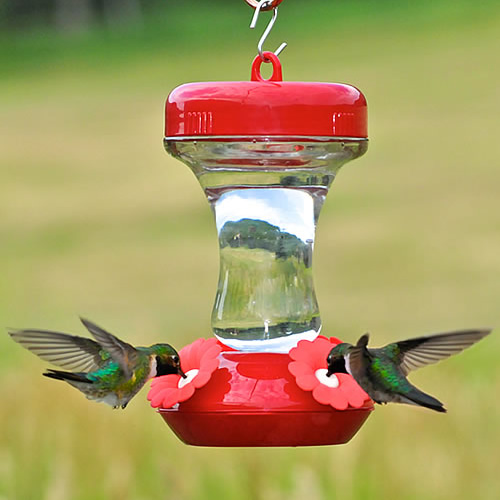 8 oz. Glass Hummer Feeder