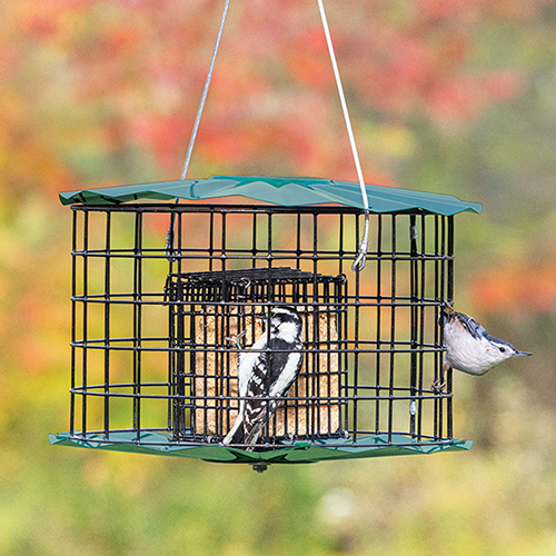 Baffled Suet Feeder