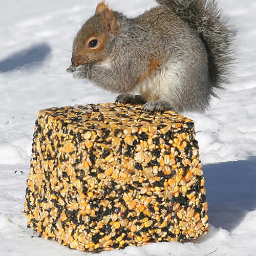 Giant Wildlife Seed Block, 15 lbs.