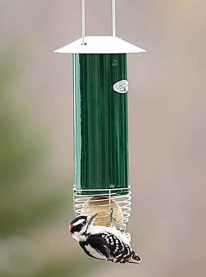 Automatic Suet Ball Feeder