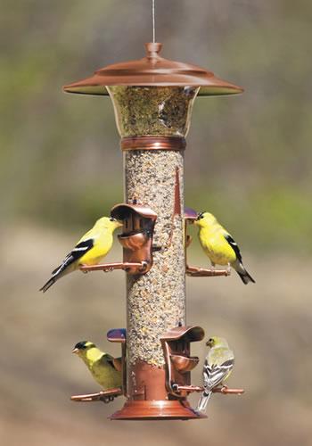 Duncraft Com Classic Brands Radiance Bird Feeder