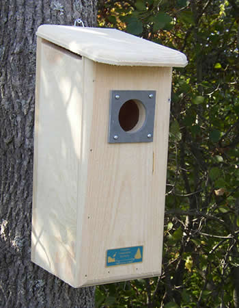 Three Woodpecker House
