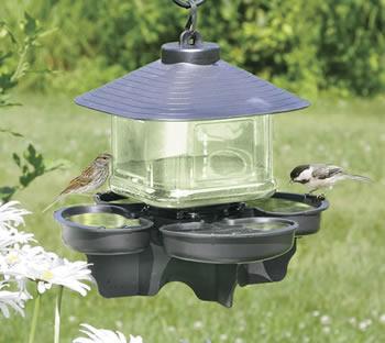 Bird Water Cooler