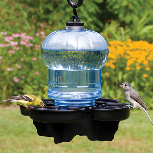 Bird Water Cooler