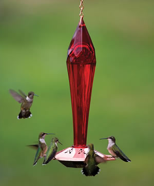 Ruby Red Hummingbird Feeder