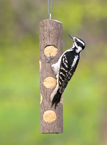 Eco Log Suet Feeder