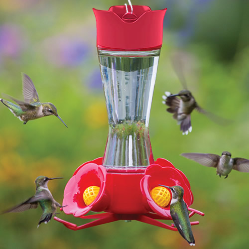 Our #1 hummingbird feeder has it all! Attract hummingbirds to your backyard with our #1 hummingbird bestseller. Successfully keeps out insects with the built-in ant moat and four yellow bee guards. Watch hummingbirds perch and feed at each flower feeding port. Includes S-hook for hanging. Popular hummingbird feeder with red plastic and clear glass jar. 7 inch diameter overall. 8-1/4 inches tall.    8 oz. capacity with 4 feeding ports Attract hummingbirds with our #1 most popular feeder Features wide mouth opening with flat base for easy filling Disassemble top, base & ports for easy cleaning