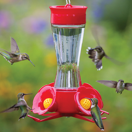 for humming height hummingbird image getdynamicimage weather wind glass htm bird feeder path ocean filigree main width
