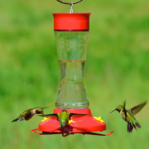 Pinch Waist Hummer Feeder and Nectar